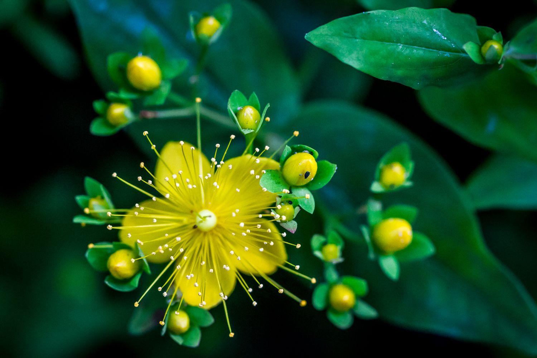 Artworks nature fleurs couleurs